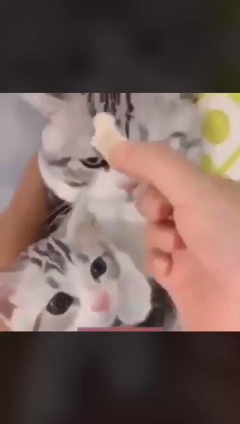 احذروا كسر الخواطر .. حتى لو كانت قطة 😊