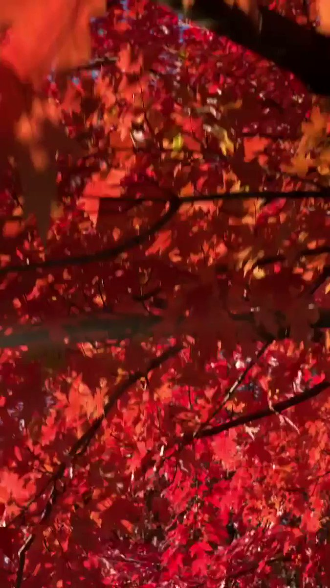 One minute of leaves.