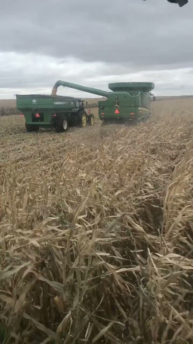 Finally hitting our stride on some beautiful @ChannelSeed #corn in the middle of the #Goodlife #harvest2019