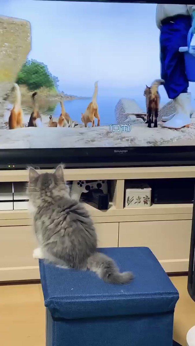 猫の番組を見せたら一緒に跳んでてかわいかった猫