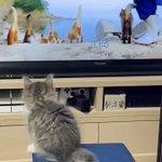 画面の向こうの猫たちにつられて一緒にジャンプしちゃう姿にグッとくる!とにかく可愛いと話題の猫動画!