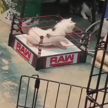 All paws must hit the floor!