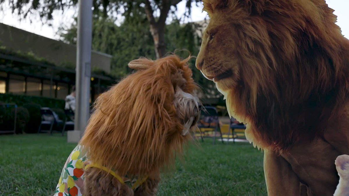 . @dog_rates joined Disney at this dog-friendly screening of The Lion King! Gather your own pups for a movie night with #TheLionKing now on Digital & Blu-ray: di.sn/6000ECcxA