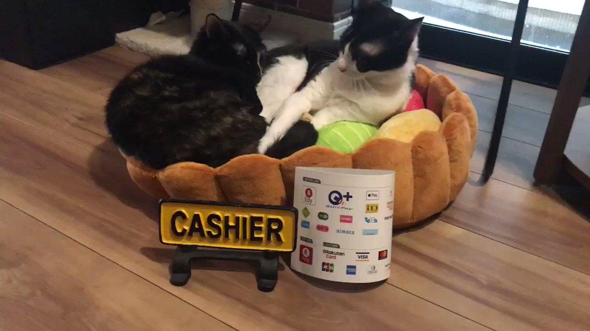 おはようございますにゃっ❣️本日もほっこりオープン致します〜(=^x^=)♡ねこ田さん家では、お支払いに現金以外にも表記のクレジットカードや電子マネーもお使い頂けますよ^_^✨ #猫カフェ #大阪 #猫動画 #cats #土曜日 #おはよう #週末 #猫好き #もふもふ #癒し #可愛い #中崎町 #ねこ