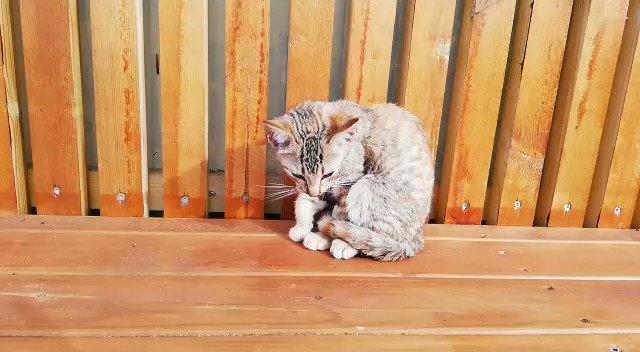 Necesitamos #URGENTE acogida para poder rescatar a este gatin, es tan solo un bebe y tiene la pata fatal. #AyudaConUnRT #Difunde #RtxRt