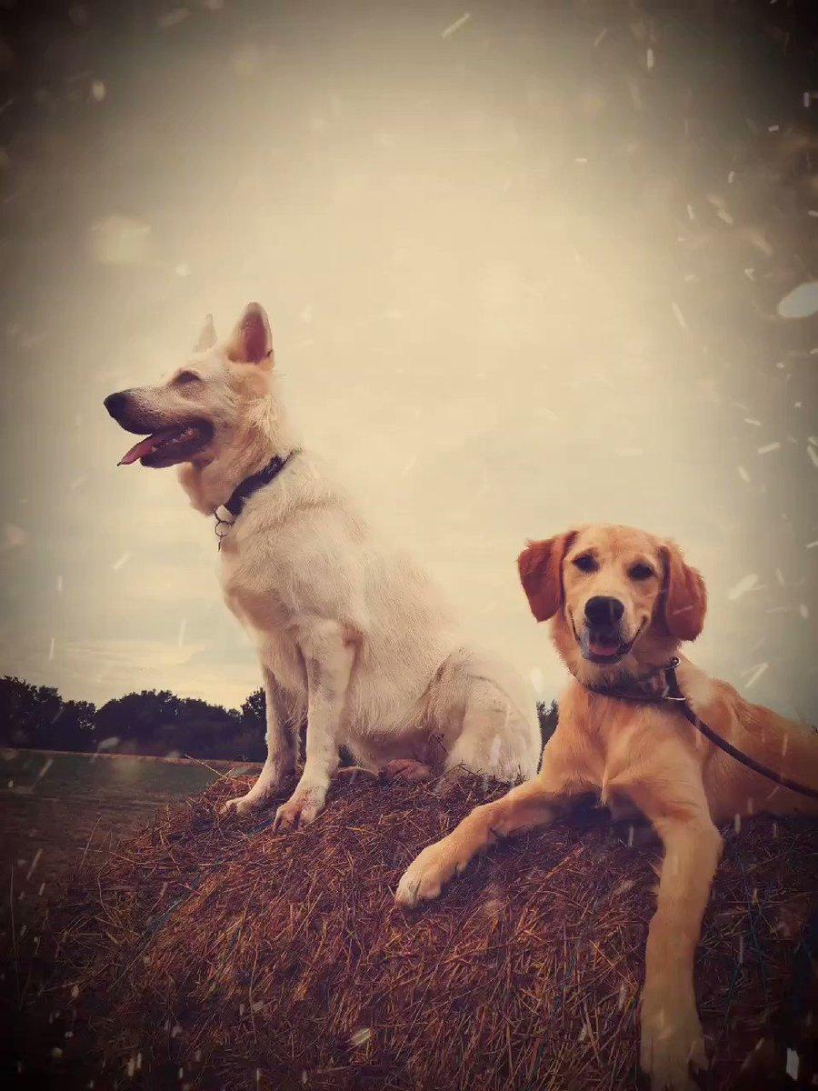 Mlle Texas et Laska 🐾 I On monte la garde 😁😅  #recreanimo #pourlamourdesanimaux #chien #doglover #dog #petsitting #petsitter #toulouse #lamourdesanimaux #animaux #30millionsdamis #beautiful #cute  #lovedogs #animauxdomestiques #animauxdecompagnie  #animauxmignons