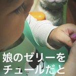 娘が食べているゼリーが猫ちゃんはチュールだと思って凝視している目が凄い!