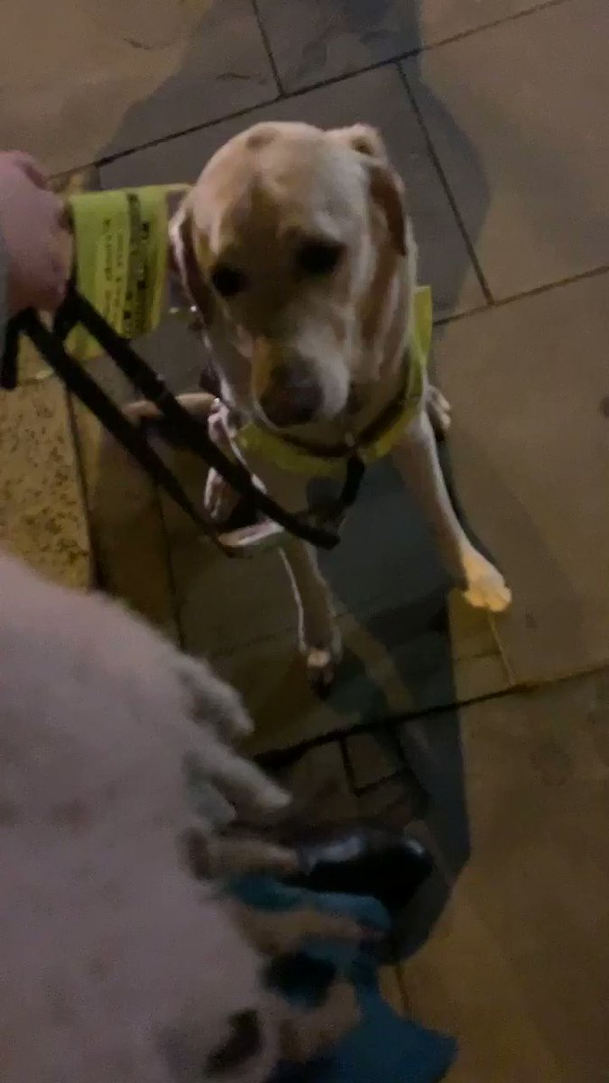 This is my Guide Dog, on our way home from work at 5pm, rooted to the spot & shaking with fear after fireworks went off nearby. Not only do fireworks cause extreme distress for dogs & humans, they pose risk to disabled ppls safety. This has to stop. Fireworks NEED to be regulated