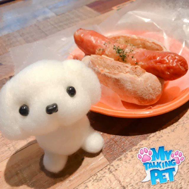 犬を飼い始めました! 名前は「シロ」讃岐弁で話します起業家の方向け共感コトバトレーニングジムLINE▼ご登録はここをクリック!