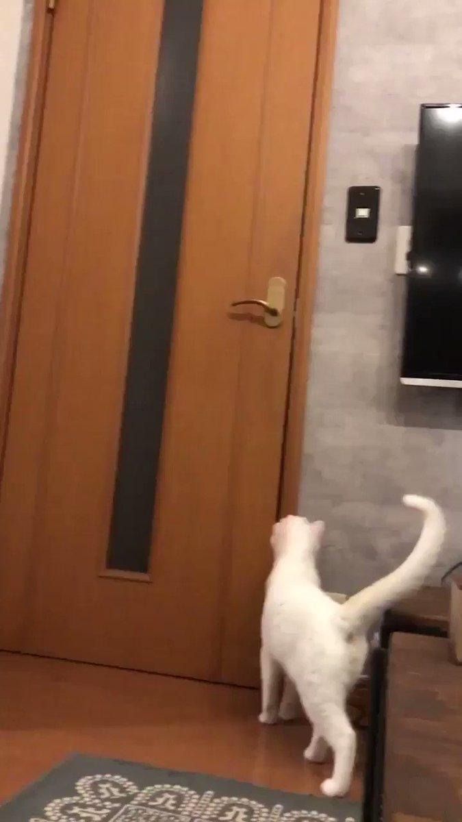 ドアを攻略した猫ちゃん→対策されて激オコになる@yy221126さんから