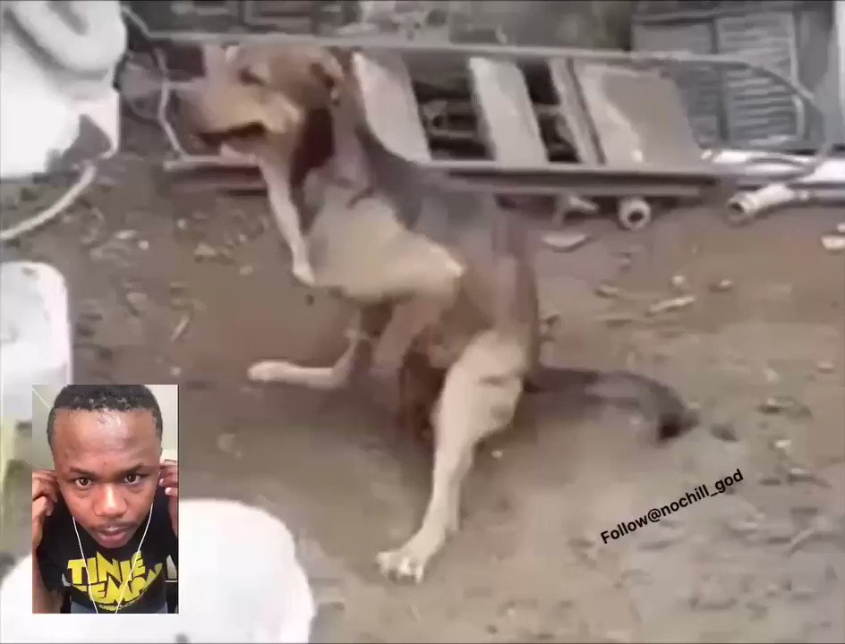 I really don't know what's wrong with dog #bobby ... is trying to kill me with strong bullets of his... download link bit.ly/2qCwO96 #KFCProposal #anele #opwmzansi