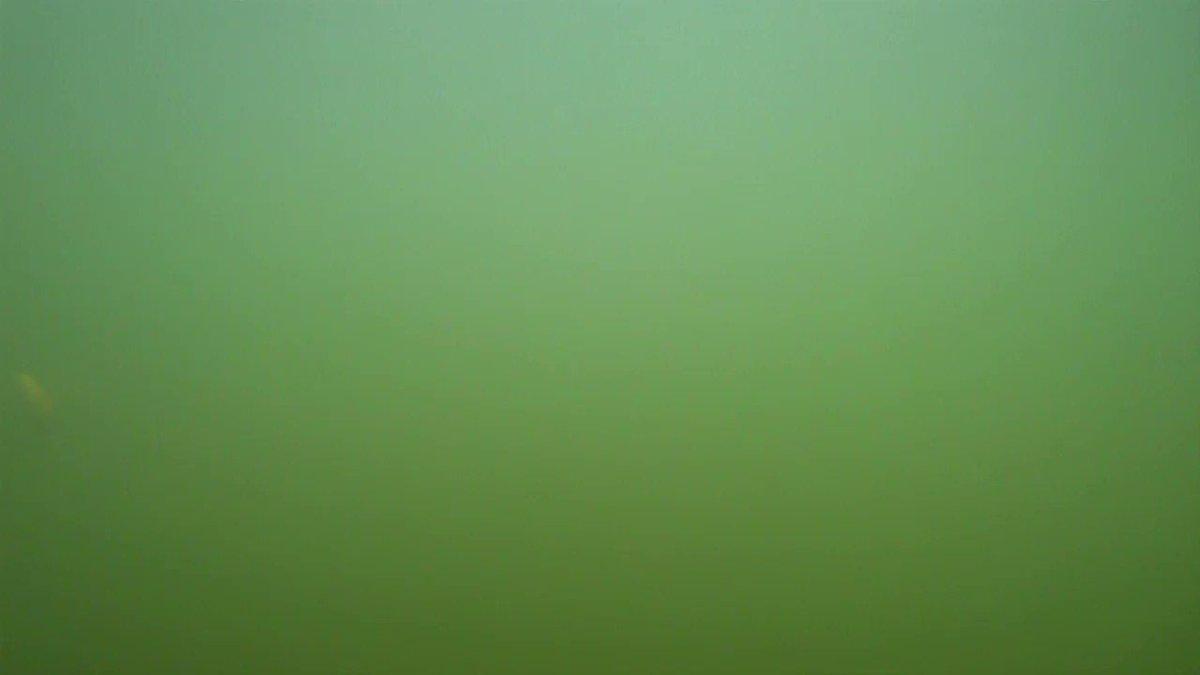 オニちゃんが低水温期に多用するシャロースモーキンシャッドの水中アクション❗フックはピアストレブルの6番🐠#オニちゃんねる #オニちゃん #ピアストレブル #ryugi #StanfordLures #スモーキンシャッド #smokinshad #vish #fishing