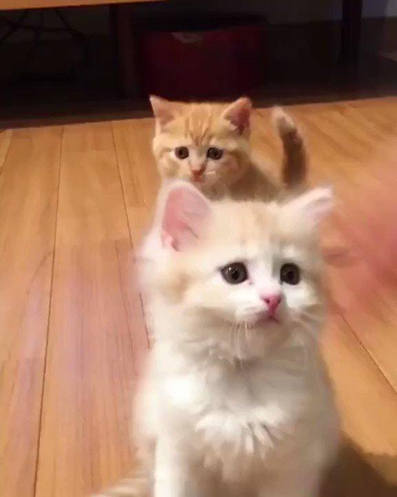 Cute Kittens Party #cat #cats #kitten #kittens #kitty #caturday #catlover #catlovers #catlife #catsofinstagram #catstagram #CatsOfTwitter #KittenVideo #KittenVideos #KittensVideos #kittensofinstagram #ilovecats #CuteKittens #CuteKitten #f4f #FolloMe #MondayMood #MondayMorning