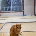 ものすごい身体能力・そして犬のように賢い猫ちゃん!!!!