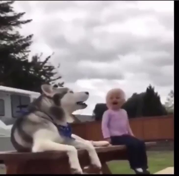 I cannot stop laughing. And it gets funnier the more you watch it.