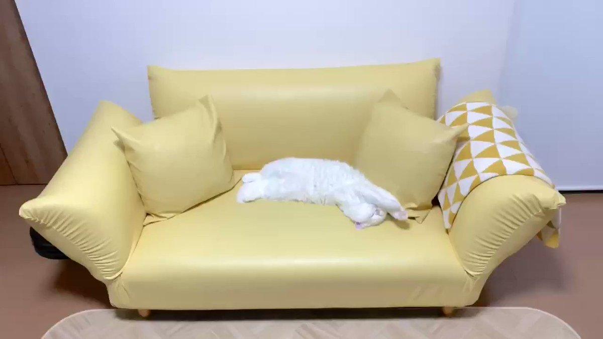 ソファーにわたあめが落ちてた!