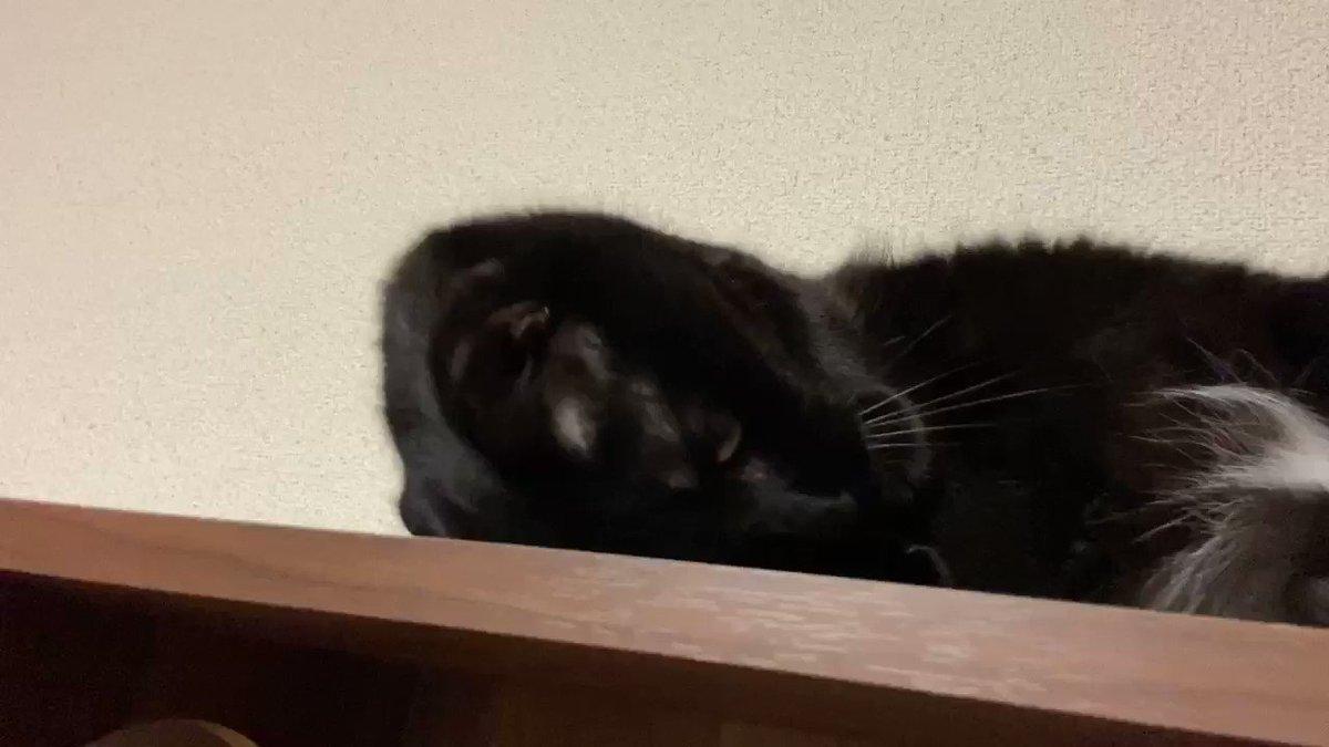 黒猫はツヤがあってカッコイイ🤩