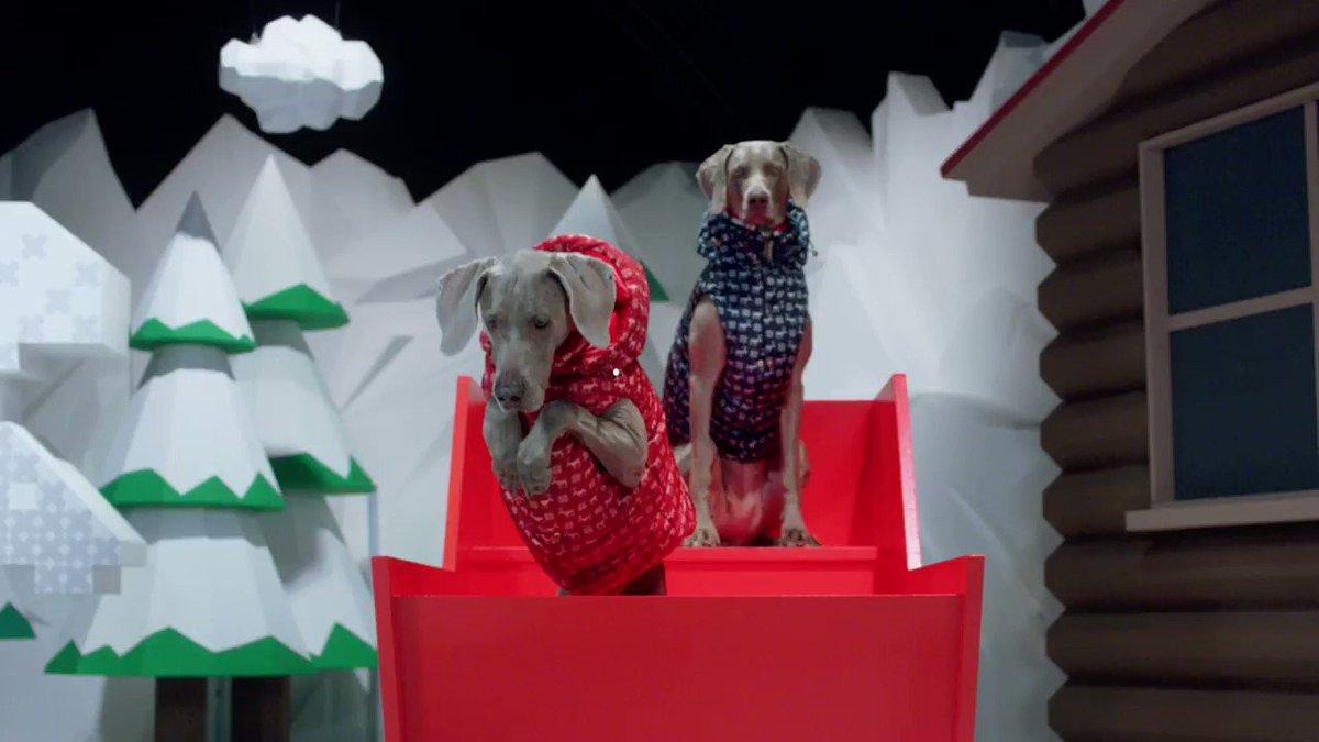 【今日発売】犬用ダウンが揃う「モンクレール ジーニアス」新作、ジレやレインコートをアレンジしたモデルもラインナップ
