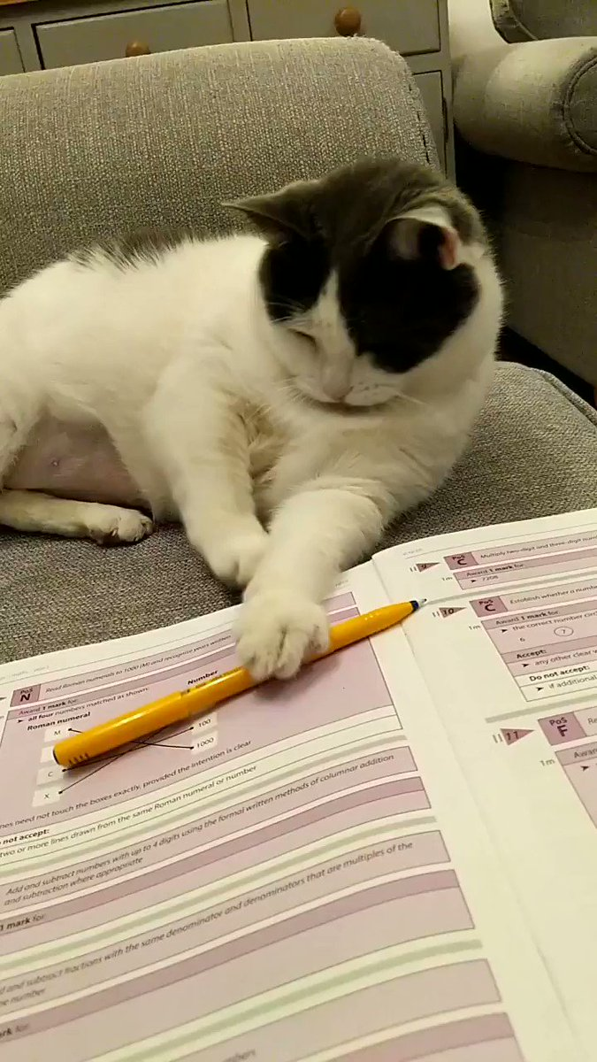 Image for the Tweet beginning: #catteacher test marking #procrastination #teacherlife