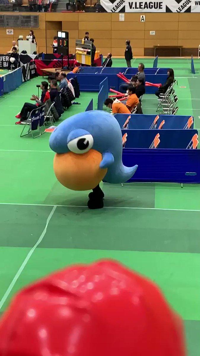 踊るアラマちゃん!動きが可愛すぎる❣️#V2リーグ戦 #酒田記念体育館 #アランマーレ山形 #踊るアラマちゃん