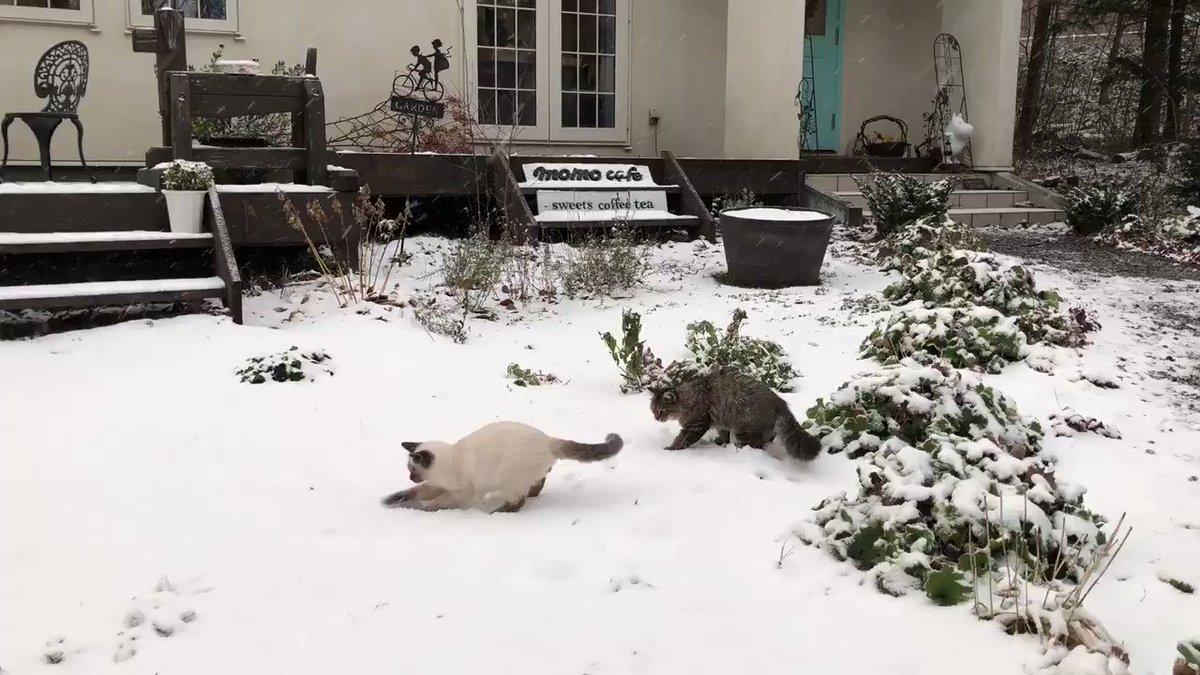 初めて雪を体験した時の様子(2年前)