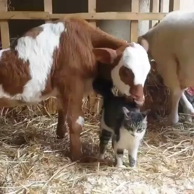 Image for the Tweet beginning: ❤️❤️❤️  from freedom_farm_sanctuary