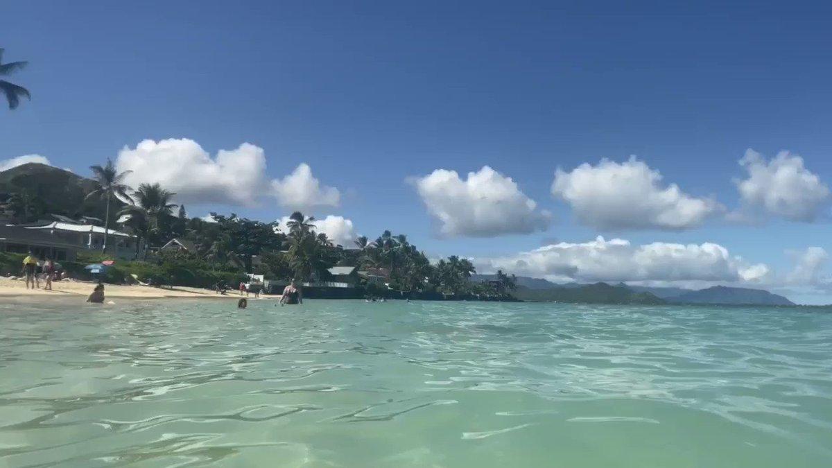 bosyuさんのハワイ#お土産ツイート①▶︎ラニカイビーチ編🏝ホノルルからレンタカーで30分。うそみたいに青い海、小麦粉みたいにさらさら白い砂浜…天国すぎた✨海水からあがってもべたつかないのも不思議。日焼けを気にするのも忘れて遊びました。小魚いるので、ゴーグル🥽持参がおすすめ!