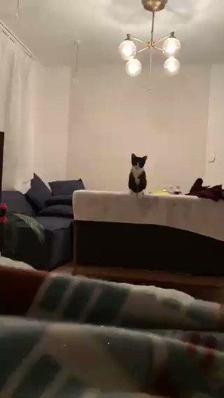 #今日のネコチャンジャンプの高さ、そして見事な着地…これは金メダル間違いなし!?画像提供:@snosukenosuke#猫好きさんと繋がりたい跳躍を完全に極めた小さなネコチャン!飼い主さんに飛びつくオリンピック級のジャンプ力にほっこりする