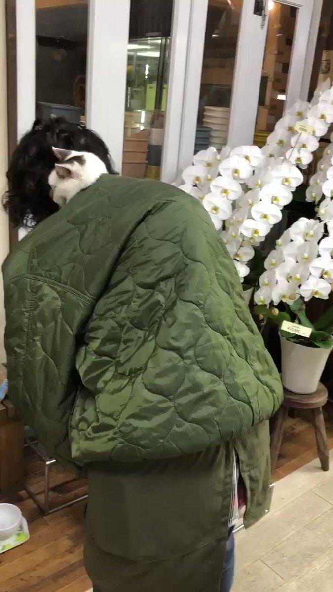 厚着ですみません#農場長 #広報部長 #おんぶ猫 #コアラ猫 #バーゲン無事に終わったよ