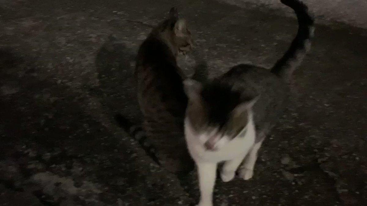 猫盛り沢山🐈#猫