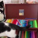 「可愛いおじゃま虫」藤あや子さんの飼い猫のイタズラが愛しすぎて萌える