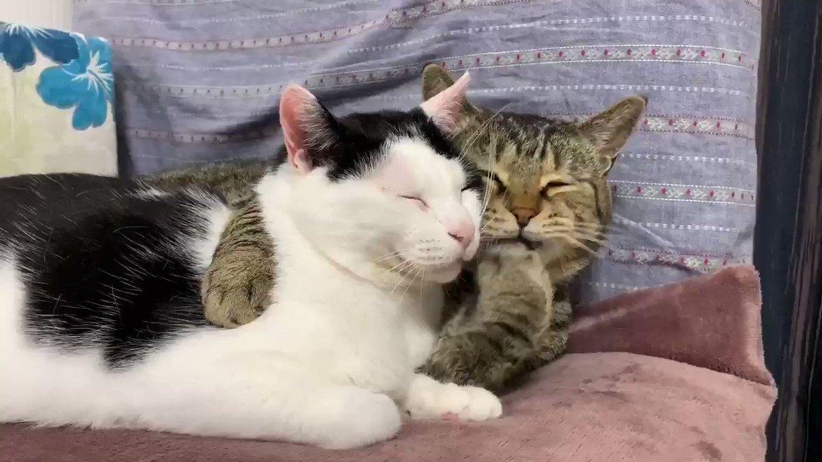 肩組む猫を見てると『カワイイ』と『カッコイイ』が同時に襲ってくる
