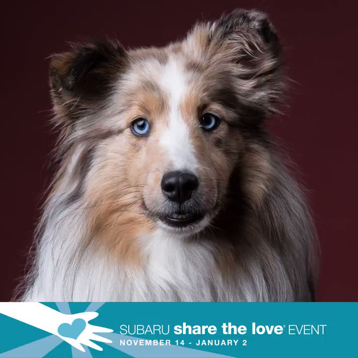 Image for the Tweet beginning: The Subaru Share the Love®