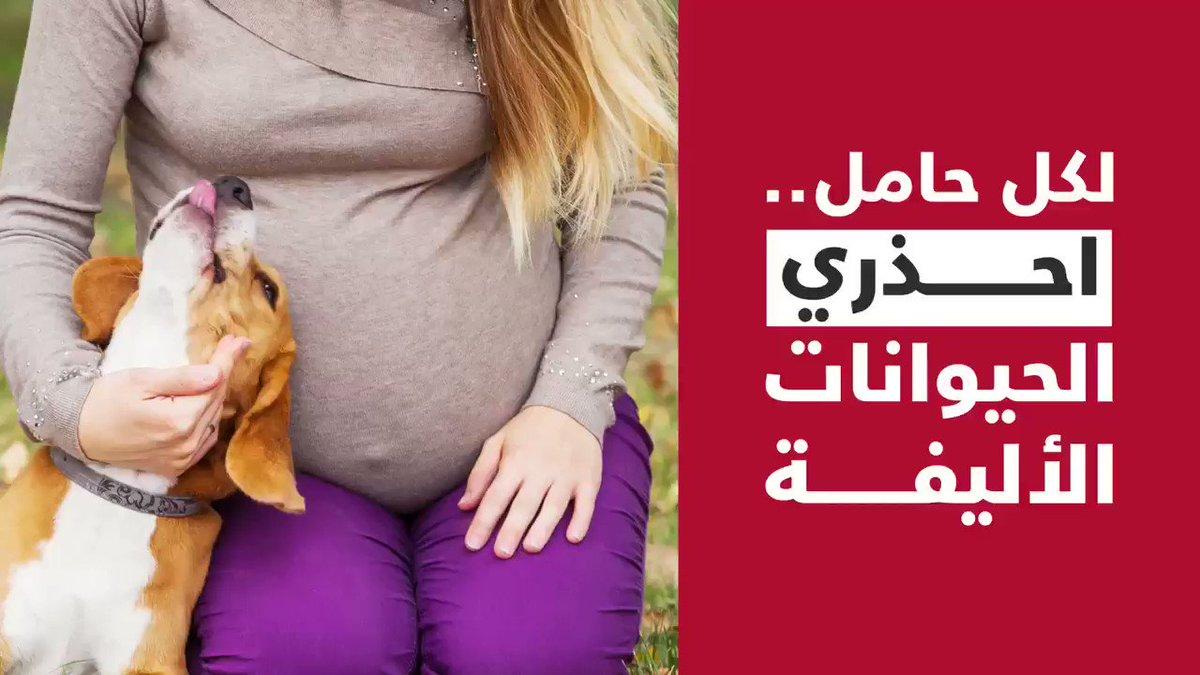 لكل حامل 🤰🏻احذري الحيوانات الأليفة .. 🐱🐶#فيديو_سبق