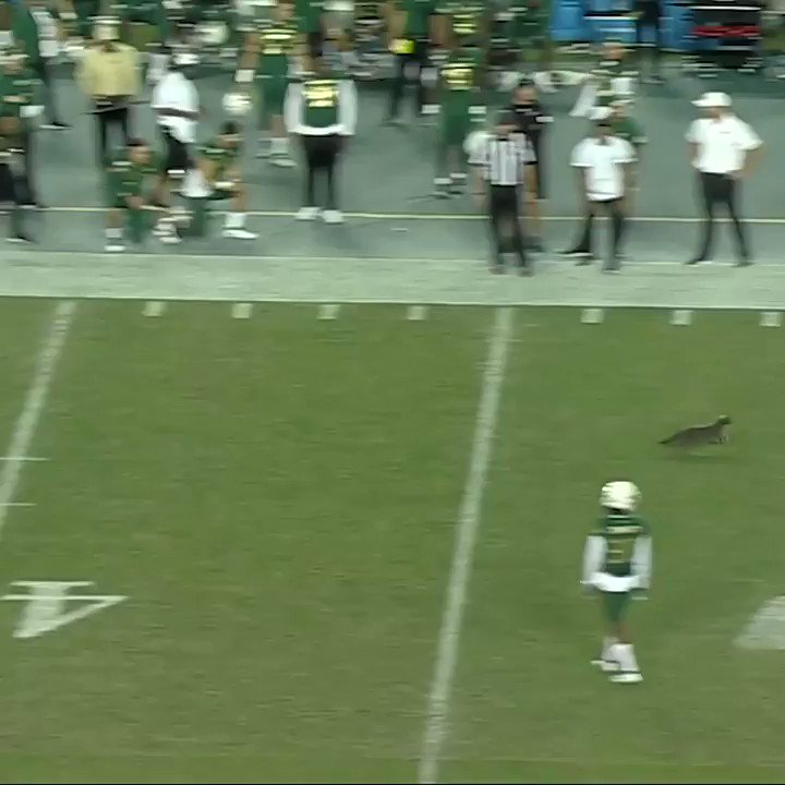 Cat Runs on College Football Field During Game