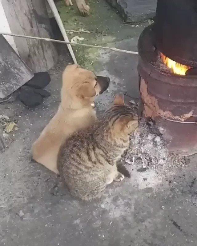 【朗報】暖を取るめちゃかわ生物達、一生かけて守りたいと話題に