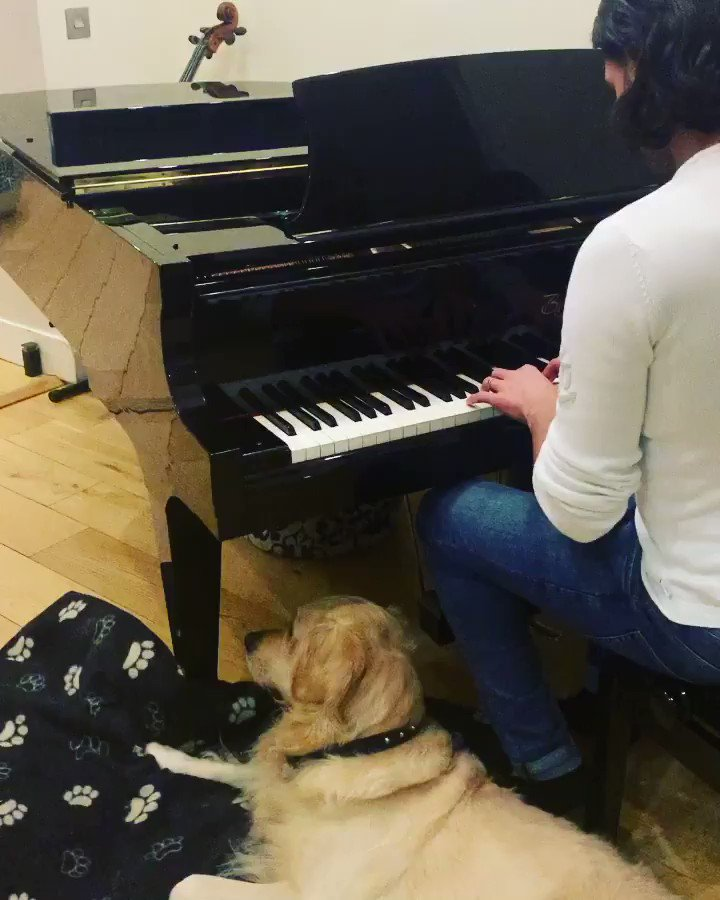 I've just learned to play the piano 🎹... More or less 😂 • #piano #dog #friends