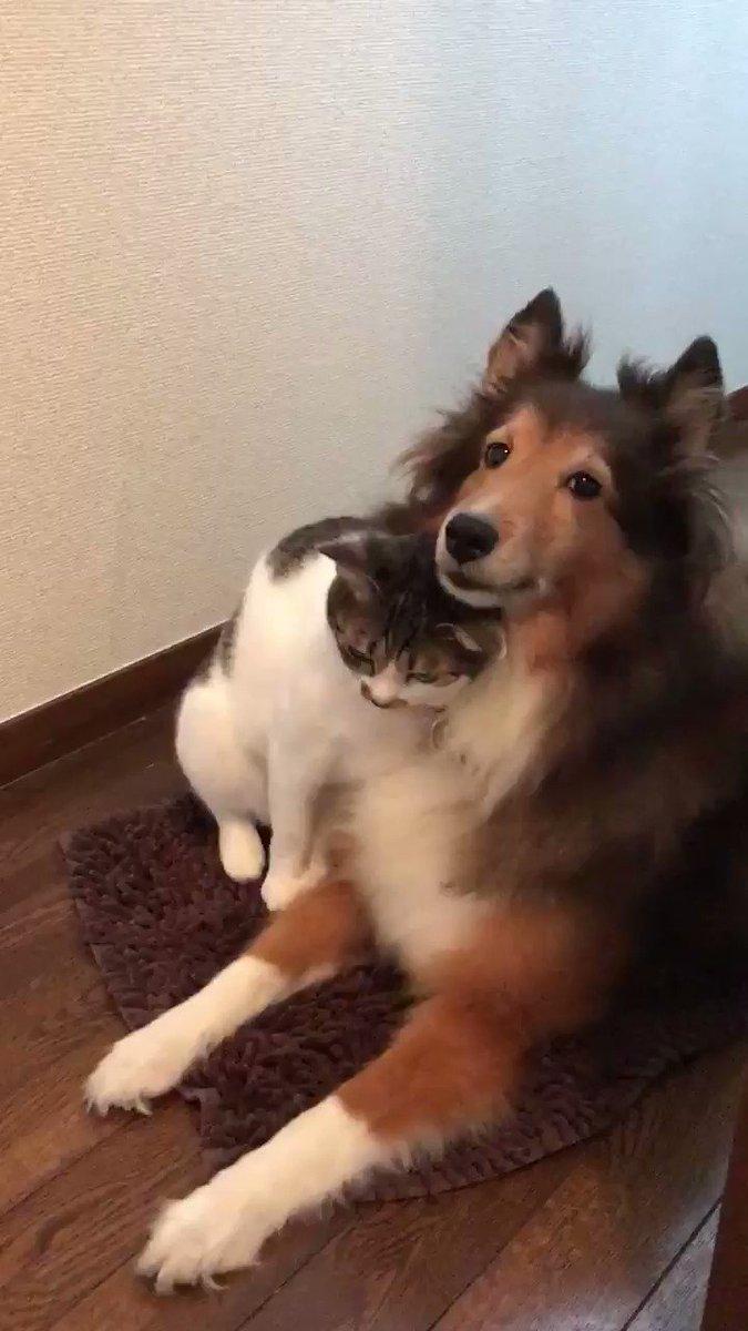 猫が犬にじゃれてる動画好きすぎる… 😍