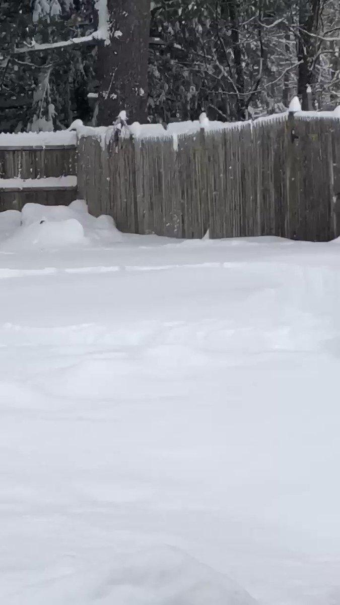 Replying to @cindystlou: Wait for it......👀🐶❄️ #snowday #snowdog #dog #happydog #upstateny