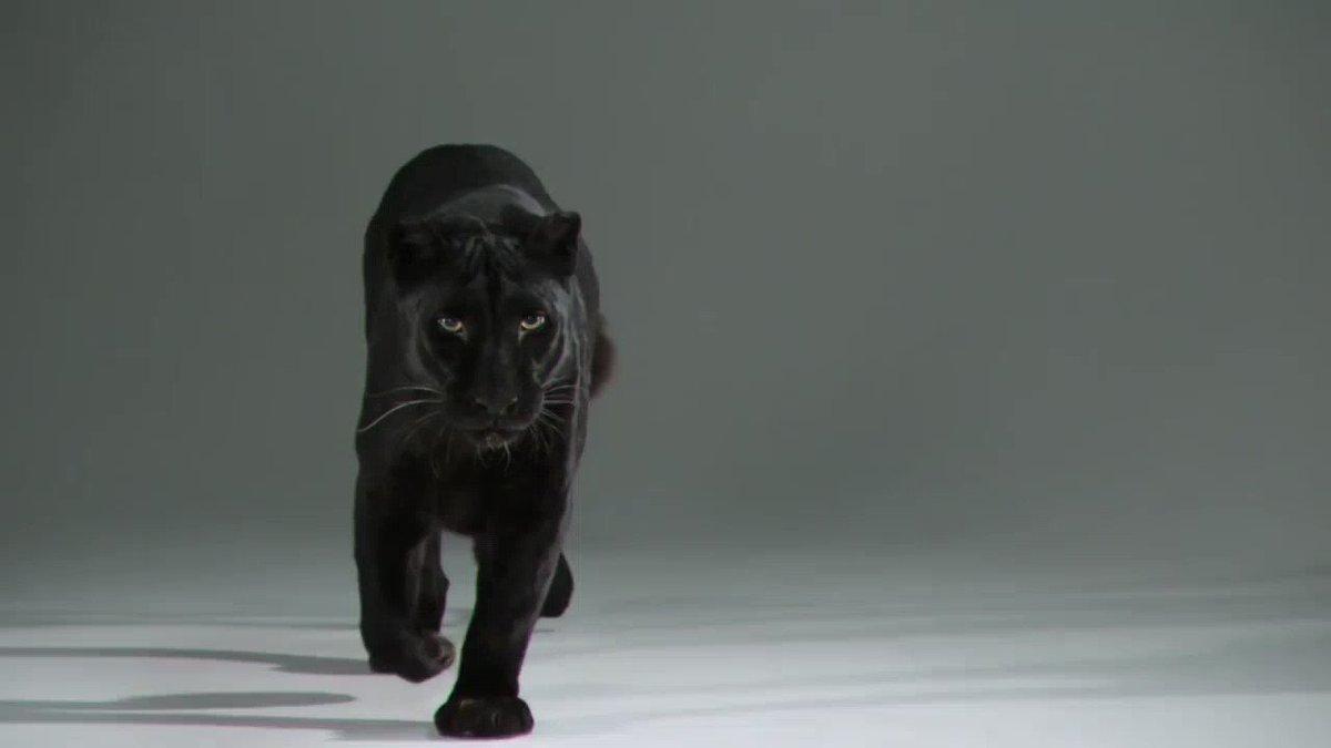 как крути, котенок и негр картинка гиф воздух оказывает