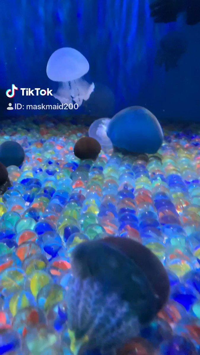 水族館っていいよね!カワテブクロ以外にも魅力がいっぱい!アザラシのダイナミックな鼻呼吸とか!#tiktok