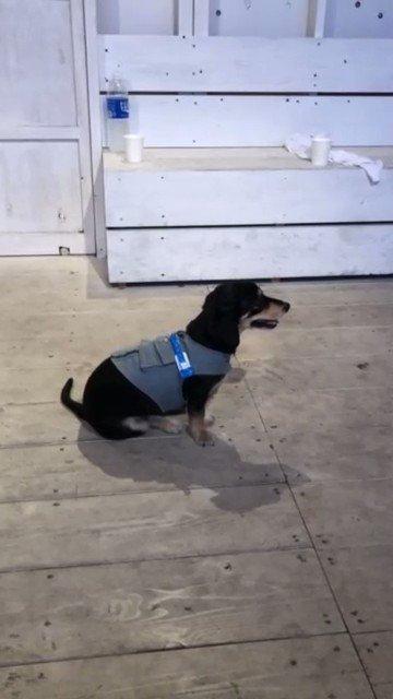 最近tiktokの中で密かに犬愛を爆発させてる…🤣💦笑この投稿はみやかわくんも登場してる🙆♂️笑あー、愛してる😭犬三姉妹#TikTok