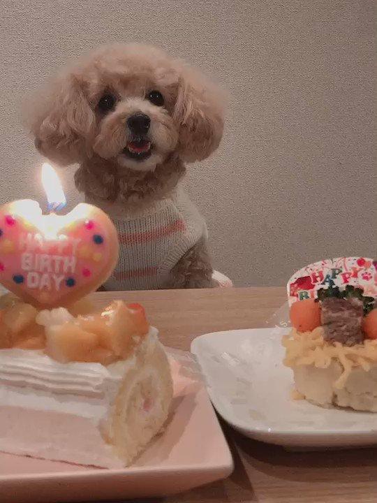 ビデオ通話を通してクララのお誕生日を家族でお祝いすることが出来ましたっ🥰🎉クララは私の声ちゃんと聞こえてるのかなぁ…😅クララの視線に注目🐶🎂💕
