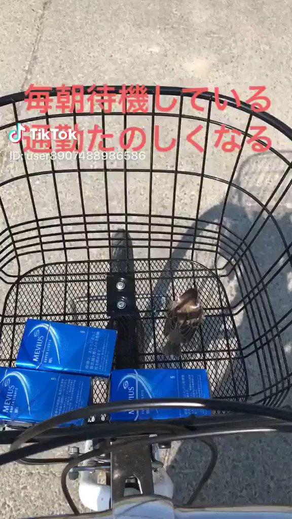 野生のスズメと仲良くなった男性📸 @大渕つぐぢ(TikTok)