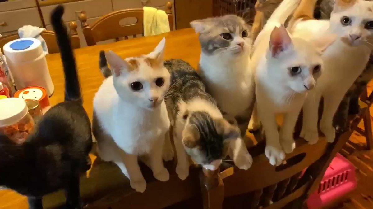 🏝お早うございます😽‼️☔️です。今日は、牛セリ事前予防接種、うちらの先生大忙し。先生デビューポチッとニャ👉👈18:00シレッと何か配信‼️RTも宜しくお願いニャン😻#子猫保護 #猫好きさんと繋がりたい #保護犬猫