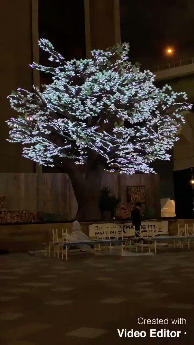 【🤶生放送まであと9日🤶】「SASASHIMA XMAS LIGHTS 2019」いよいよオープン!昨晩のツリーのテストの様子。15日の本番当日は、新しい地図の曲と連動します。お楽しみに!