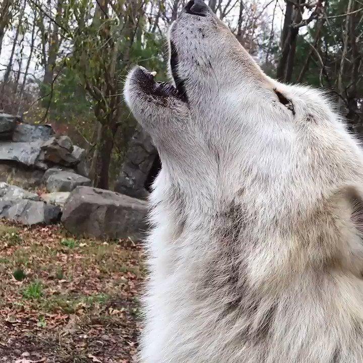 Howls ✅ Grunts ✅ Kisses ✅ #FridayMotivation