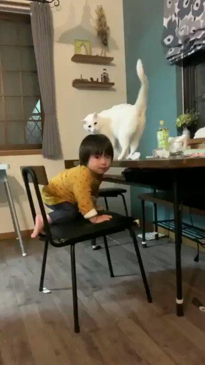 猫のベビーシッターさん!「高いところはダメにゃ!」 1歳の男の子を見守ってお世話する猫ちゃんが賢くて愛情深い  @itm_nlabzoo