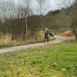 とにかく飼い主さんと一緒に散歩するのが嬉しいハスキー犬のわんちゃん!