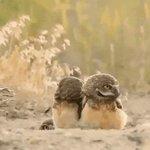 フクロウの可愛さは正義。木の枝がついてる仲間を見たときの顔が可愛すぎる。